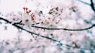 海外「日本以外にも四季はある!」日本人の四季ネタに海外から賛否両論!