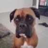 海外「表情豊かな犬だね!」ピザを目でおねだりしている犬に外国人ほっこりの嵐