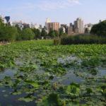 海外「旅のハイライトになったよ」上野公園の素晴らしさに外国人絶賛の嵐