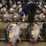 海外「お魚天国!寿司の楽園だね!」築地市場に外国人大興奮!