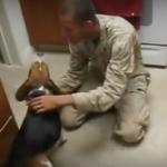 海外「可愛すぎる!」海兵隊のご主人様の帰還に大喜ぶするビーグル犬に外国人感動!