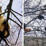 海外「ねこねこの実!」猫の実がなる木に外国人ほっこりの嵐!