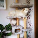 海外「とてもかわいいね!」猫と一緒に育った犬の行動に外国人癒される!