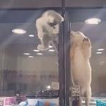 海外「萌え死にしそう!」子猫と子犬の熱い友情に外国人から感動の声!