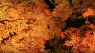 海外「日本は美しい国だ」日本列島の美しさに外国人から賞賛の声!