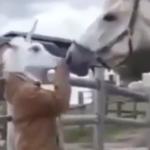海外「オーマイガ!人間だ」ドッキリに驚く馬に対する外国人の反応!