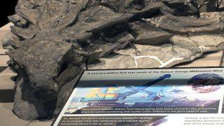 """海外「1億1千年前の""""完璧な姿""""の恐竜の化石が発見!」世紀の大発見に外国人興味津々!"""