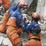 海外「メキシコ地震で日本の救助隊が子犬を救出!」海外から称賛と感動の声!