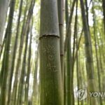 NHK「京都嵐山の竹林がハングルの落書きで毀損されてる!」韓国人から国際恥さらしだの声
