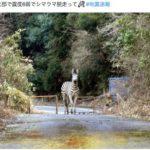 韓国「大阪地震で日本人が外国人嫌悪デマを拡散!関東大震災から変わらない民族性だ」の声