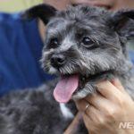 韓国「文大統領の愛犬が犬肉反対イベントに参加したよ!」他人の食生活まで干渉だ!の声