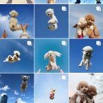 韓国「韓国のSNS上で大流行中の子犬を空に投げる「空ショット」に動物虐待だ」の声